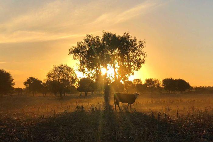 Farmers embrace our unpredictable climate