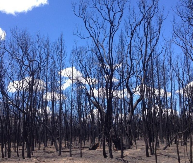 Landcare NSW supports bushfire affected communities